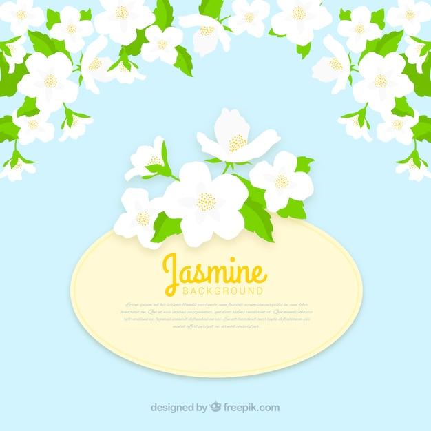 Platte achtergrond met jasmijn bloemen Gratis Vector
