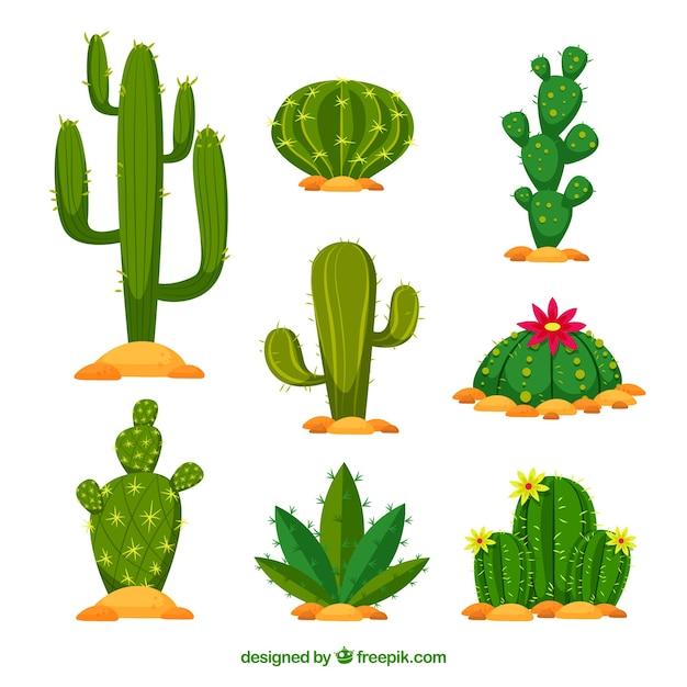 Platte cactuspakket met natuurstijl Gratis Vector