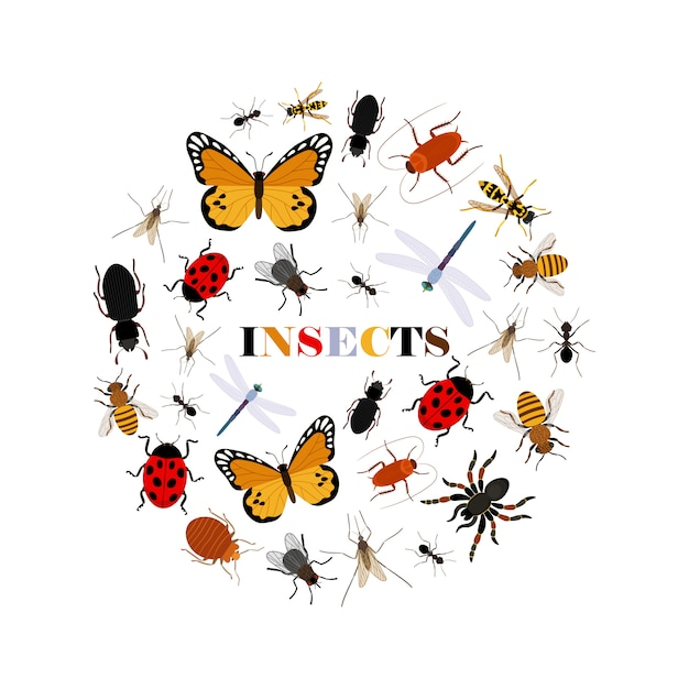 Platte insecten achtergrond Premium Vector