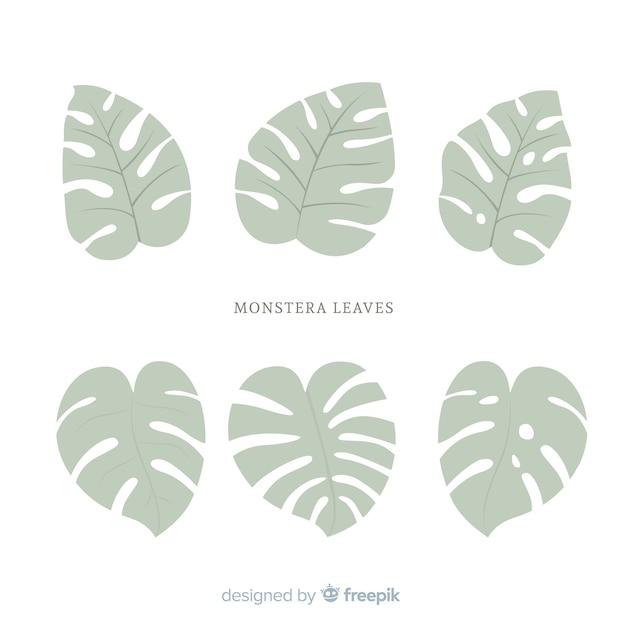Platte monstera bladeren Gratis Vector