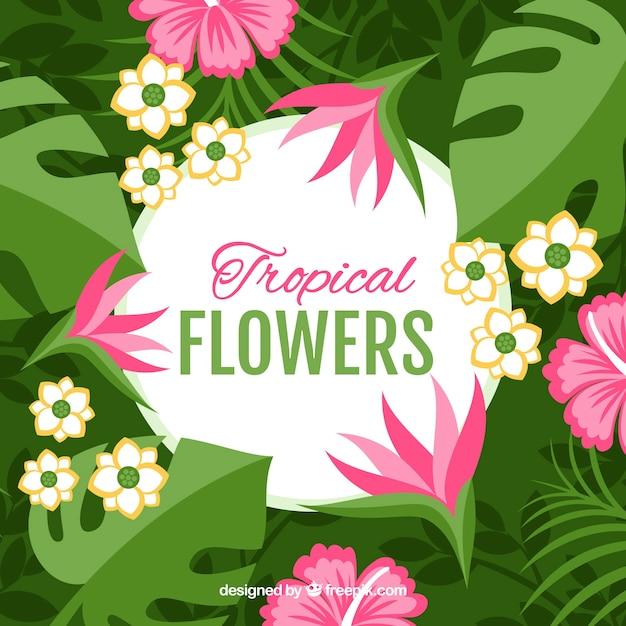 Platte ontwerp roze tropische bloem achtergrond Gratis Vector