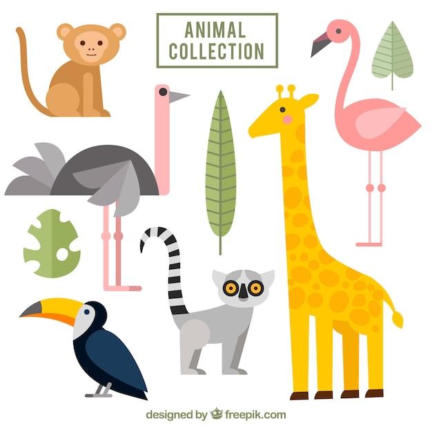 Platte pak exotische dieren Gratis Vector