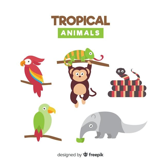 Platte verzameling van exotische dieren Gratis Vector
