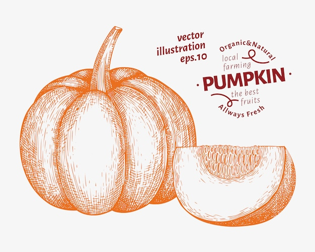 Pompoen illustratie set. hand getekend plantaardige vectorillustratie. gegraveerde stijl halloween of thanksgiving day Premium Vector