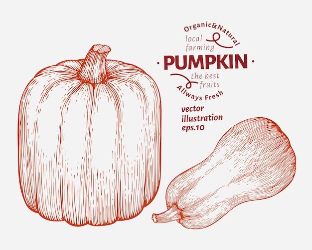 Pompoen illustratie set. hand getekend plantaardige vectorillustratie. gegraveerde stijl halloween of thanksgiving day Premium Vector