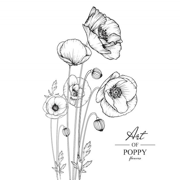Poppy leaf en bloemtekeningen. Premium Vector