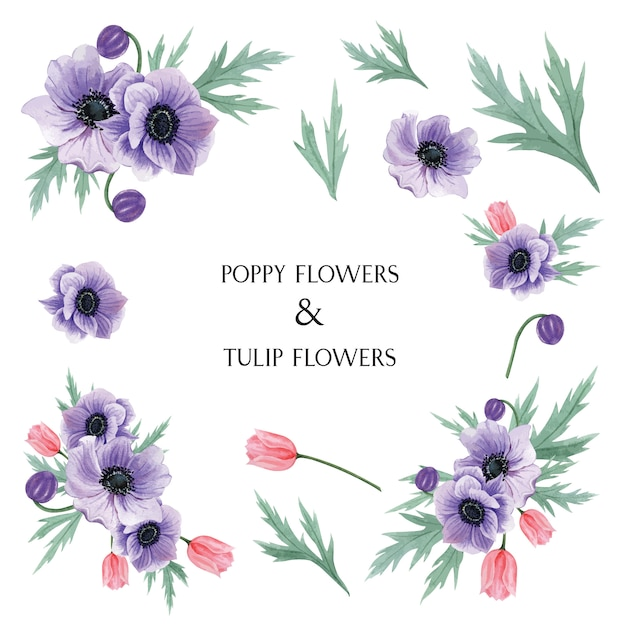 Popy en tulpen bloeit botanische de bloemenillustratie van waterverfboeketten Gratis Vector