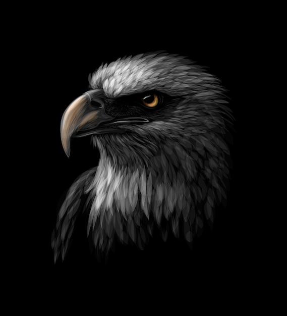 Portret van een hoofd van een amerikaanse zeearend op een zwarte achtergrond. vector illustratie Premium Vector