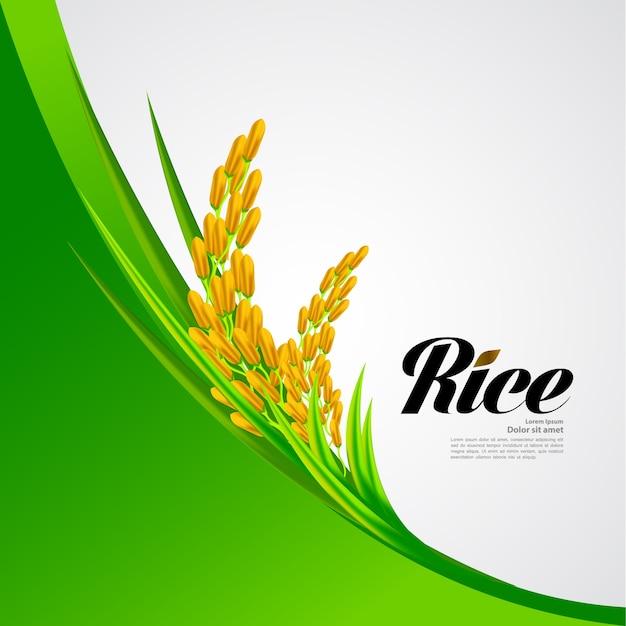 Premium rice ontwerp van hoge kwaliteit. Premium Vector