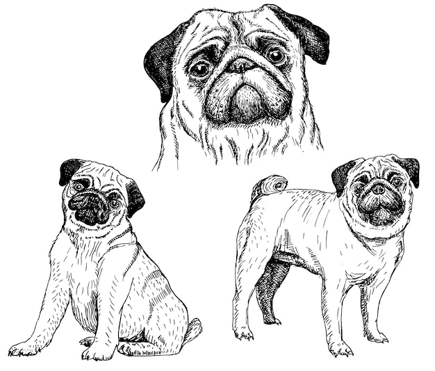 Pug dogsketch icon set Premium Vector