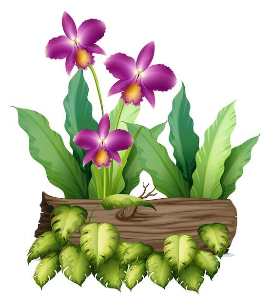 Purpere orchideebloemen en login wit Gratis Vector