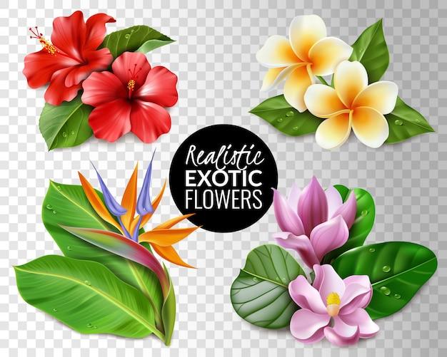 Raëlistische exotische bloemen transparante achtergrond set. collectie van tropische bloemen op transparante achtergrond elementen hibiscus magnolia strelitzia plumeria en bladeren. Premium Vector