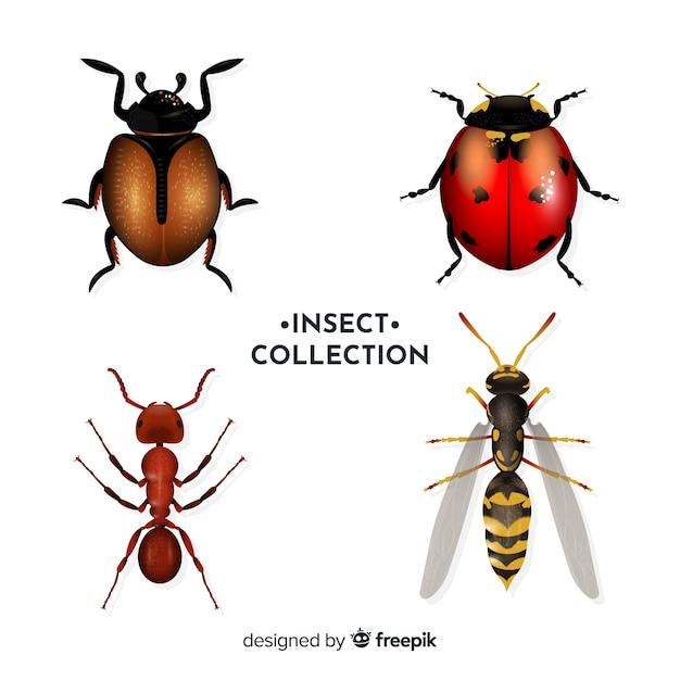 Realistisch insectenpakket Gratis Vector