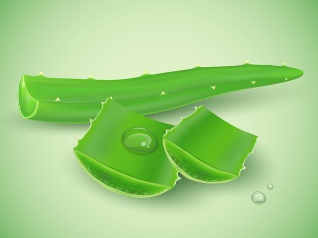 Realistische aloë vera met waterdruppel op groene achtergrond Premium Vector