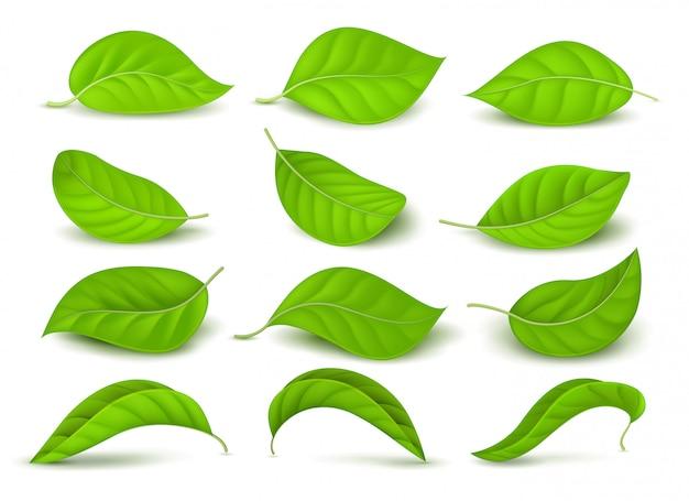 Realistische groene theebladen met waterdalingen die op witte vectorreeks worden geïsoleerd Premium Vector