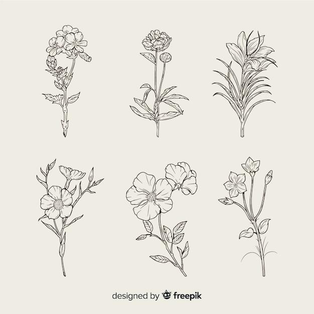 Realistische hand getrokken botanische bloemen set Gratis Vector