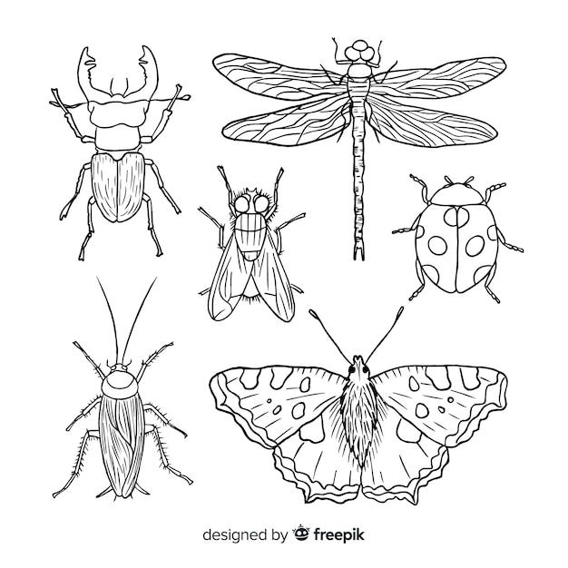 Realistische hand getrokken insectencollectie Gratis Vector