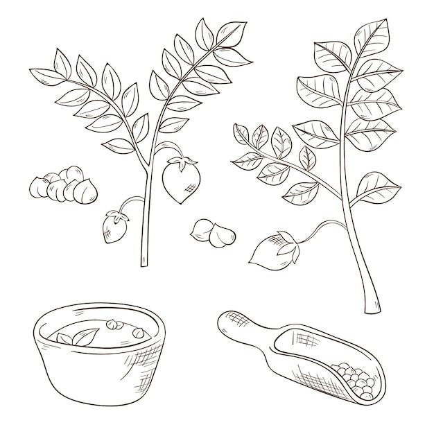 Realistische hand getrokken kikkererwtenbonen en plantenset Gratis Vector