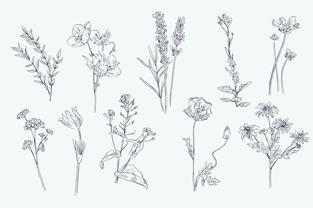 Realistische hand getrokken kruiden & wilde bloemen Gratis Vector