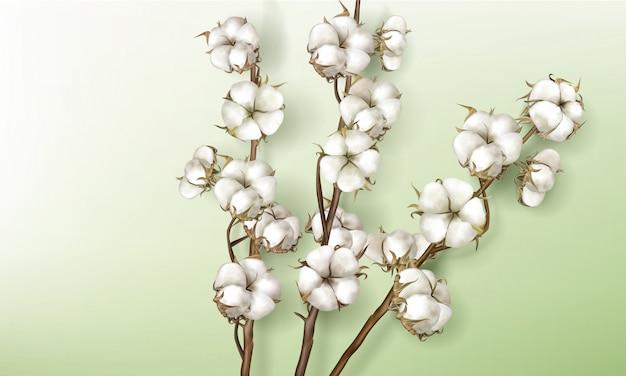 Realistische katoenen takken met bloemen en stengels Gratis Vector