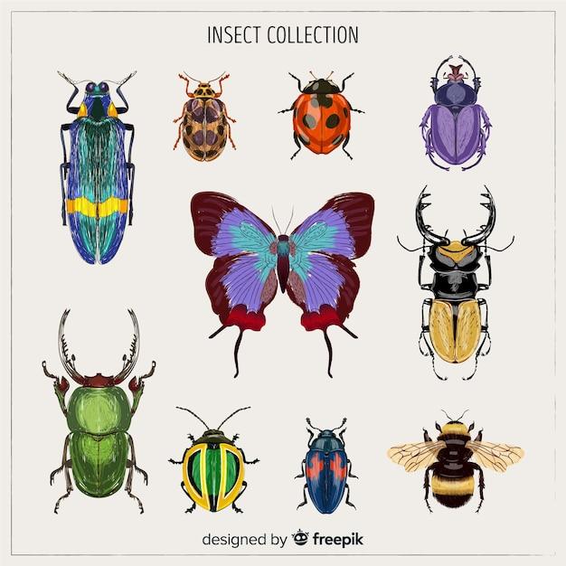 Realistische kleurrijke bug collectie Gratis Vector