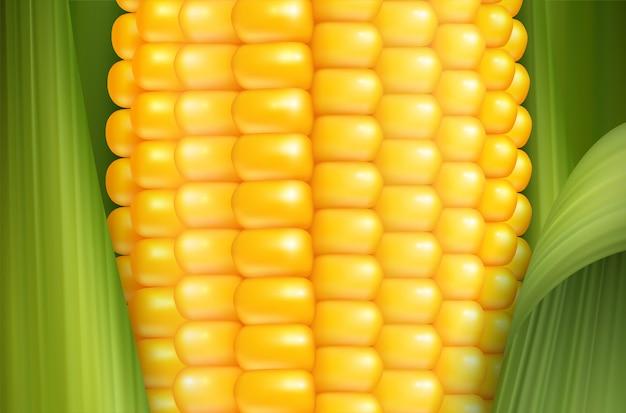 Realistische maïs achtergrond Gratis Vector