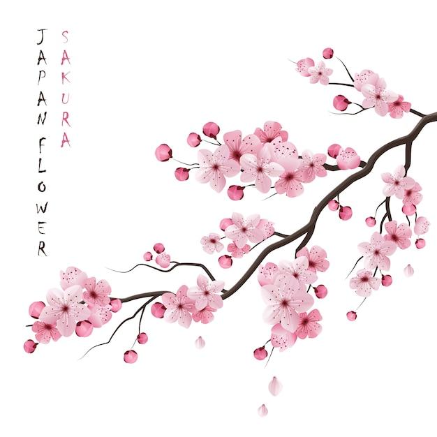 Realistische sakura-afdeling Gratis Vector