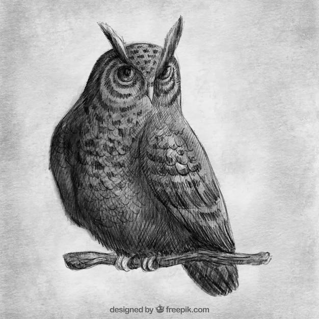 realistische tekening van uil op een tak vector | gratis download