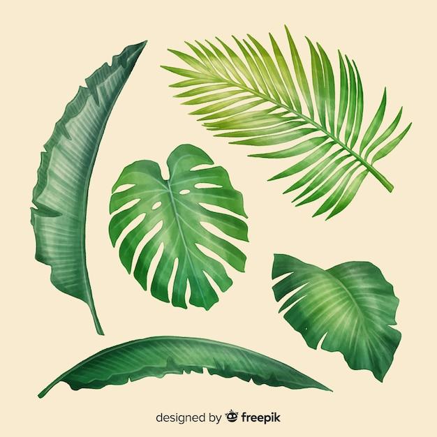 Realistische tropische bladcollectie Gratis Vector