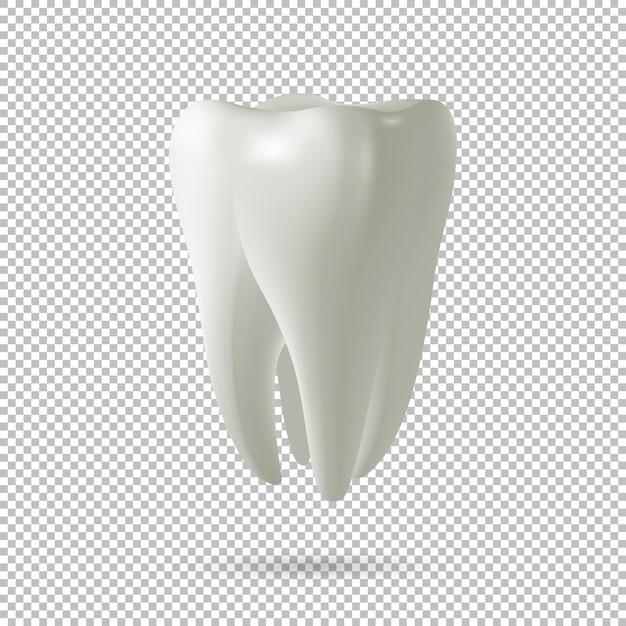 Realistische vector tand pictogram geïsoleerd op transparante achtergrond. tandheelkunde, geneeskunde en gezondheid conceptontwerpelement. Premium Vector