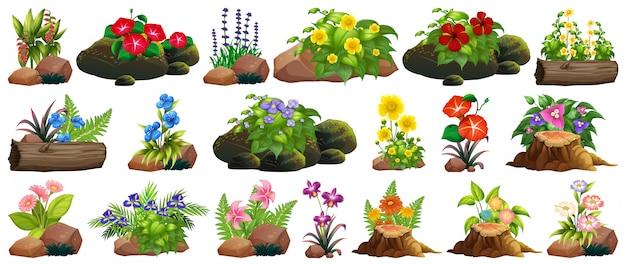 Reeks kleurrijke bloemen op rotsen en hout Gratis Vector