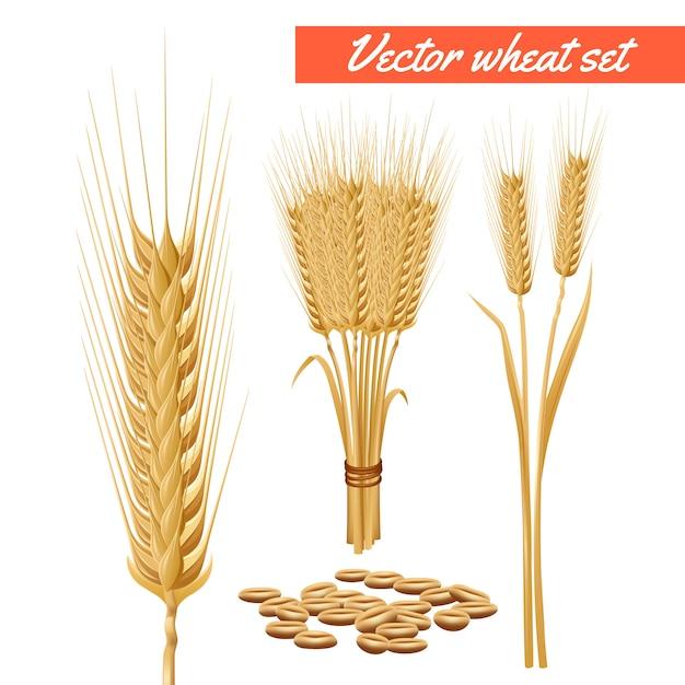 Rijpe tarwe plant geoogst hoofden en graan decoratieve en gezondheidsvoordelen adverteren poster Gratis Vector