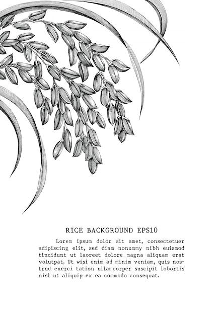 Rijst frame hand tekenen vintage gravure stijl geïsoleerd op een witte achtergrond Premium Vector