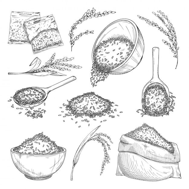 Rijst schets. zakken met graan, zaden in kom, granen in plastic zakken, plantenoren, rijstoogst in primeur icoon collectie. gezonde voeding schets. landbouw en oogstconcept Premium Vector