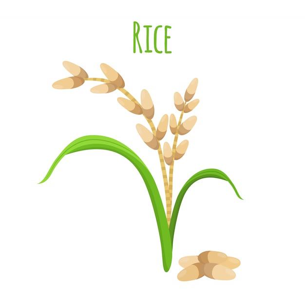 Rijstplant Premium Vector