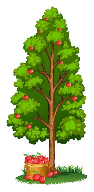 Rode appelbomen en appels in de mand Gratis Vector