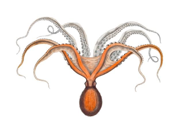 Rode octopus Gratis Vector