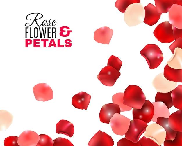 Rose bloem bloemblaadjes achtergrond Gratis Vector