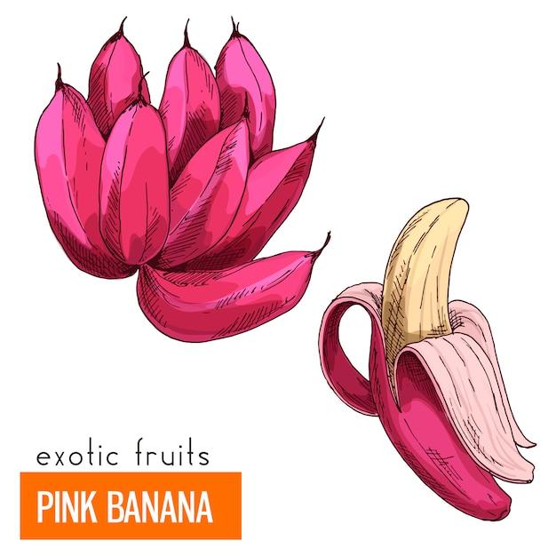 Roze banaan. kleur vectorillustratie. Premium Vector
