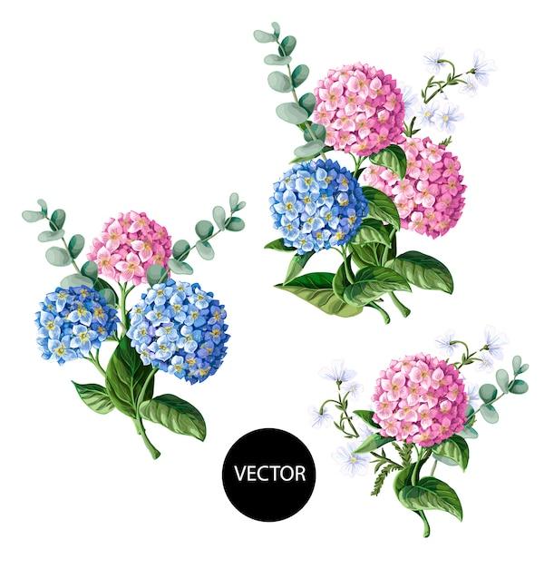 Roze en blauwe hortensia met eucalyptustakken die op wit worden geïsoleerd Premium Vector