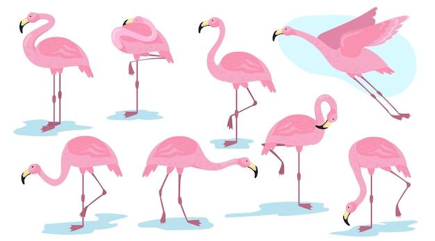 Roze flamingo vogel in verschillende poses platte set Gratis Vector
