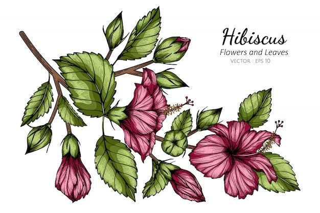 Roze hibiscusbloem en bladtekeningillustratie met lijnkunst op witte achtergronden. Premium Vector