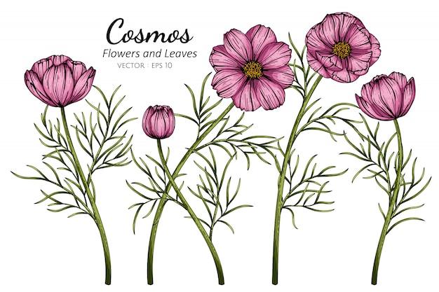 Roze kosmosbloem en bladtekeningillustratie met lijntekeningen op witte achtergronden. Premium Vector