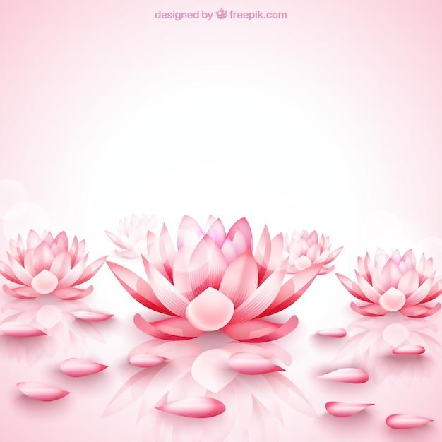 Roze lotus bloemen achtergrond Gratis Vector