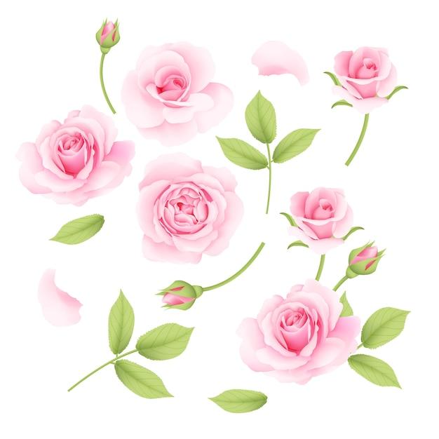 Roze rozen vectorinzameling Premium Vector