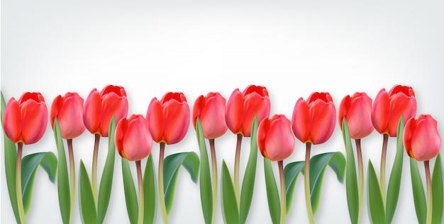 Roze tulpenbloemen op witte achtergrond Premium Vector
