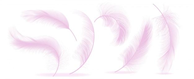 Roze veren Premium Vector