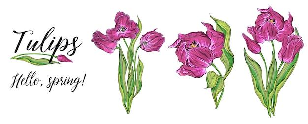 Samenstellingen van vector gekleurde tulp bloemen, lentebloemen Premium Vector