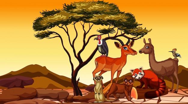 Scène met afrikaanse dieren in het veld Gratis Vector