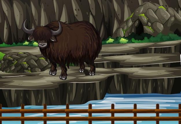 Scène met buffels in de dierentuin Gratis Vector